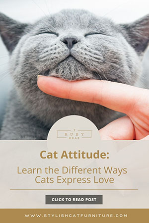 Cat Attitudes Learn the Different Ways Cats Express Love