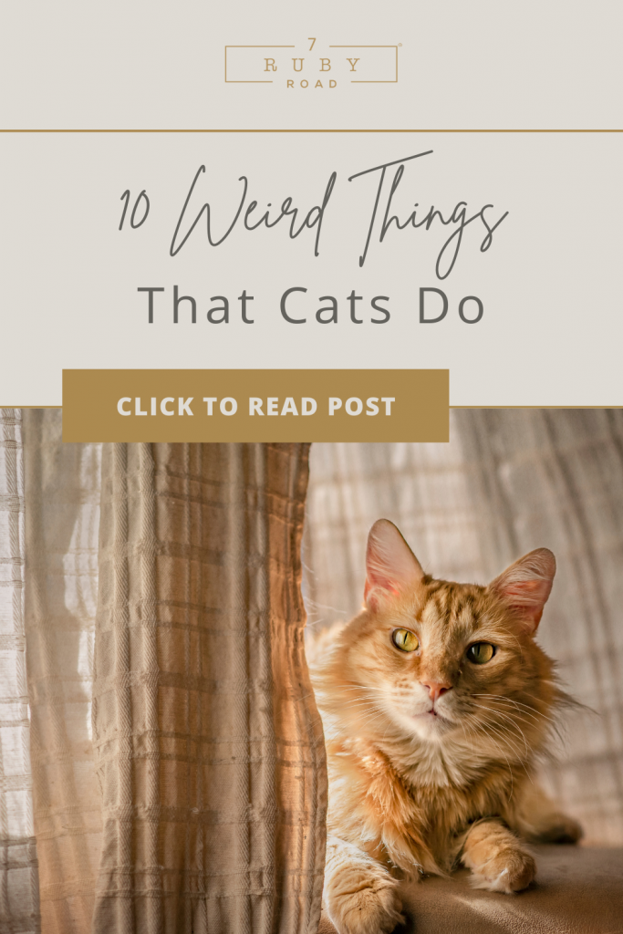 weird things that cats do