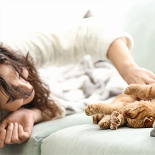 7 Ruby Road - Cat Furniture | Cat Accessories